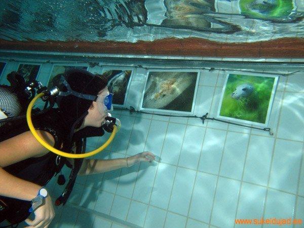 sukeldumine-silmad-vees-meresuu8